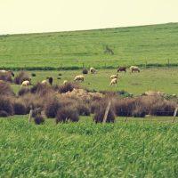 Ποιοτικά προϊόντα: Από το χωράφι στο ράφι