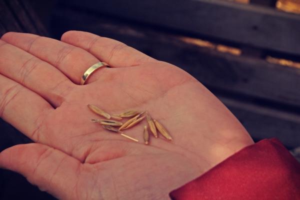 Σπόροι - πολλαπλασιαστικό υλικό