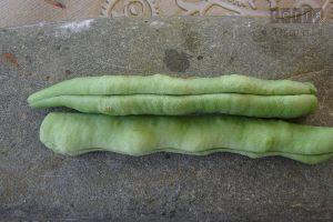 Φασολάκι